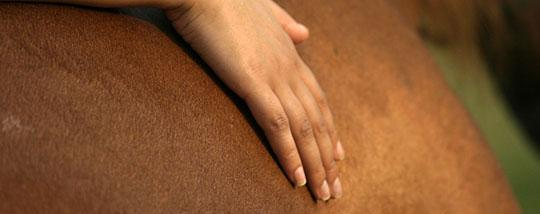 complément alimentaire cheval